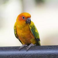 papegojor, en foto