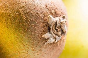 makro skott av en kiwi med suddig bakgrund foto