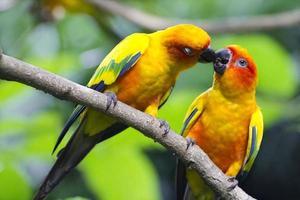 älskar fåglar foto