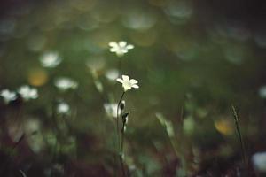 ensam blomma