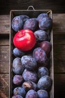 plommon och äpplen foto