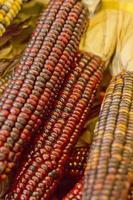 indiskt torkat majs foto