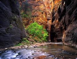 zion canyon foto
