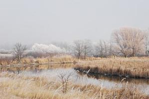 frostat flodlandskap foto