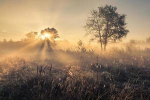 vackert mystiskt landskap foto