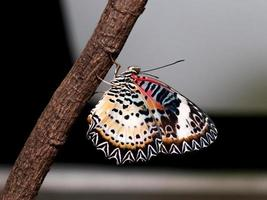 färgglada av fjäril foto