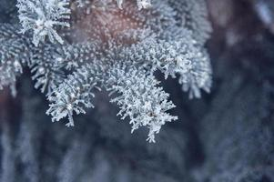 vinter bakgrund