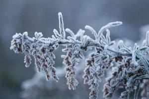 frusen vinter foto