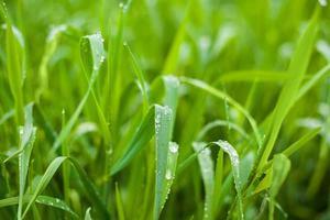 foto av grönt färskt gräs