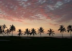 silhuett av palmer på golfbanan vid solnedgången foto