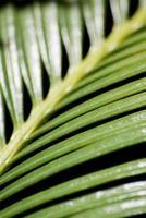 verde sobre neger foto