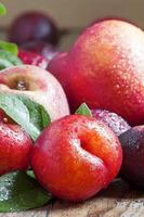 färgglada plommon och persikor foto