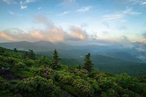 roan mountain rododron blommar 3 foto