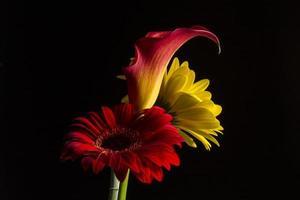 calla lily & greber daisy foto