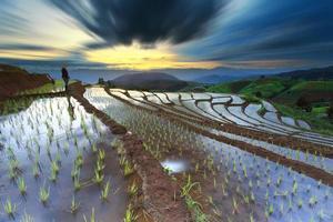 risfält på terrasserade i Chiang Mai, Thailand