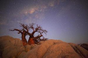 baobab-träd under mjölkvägen foto