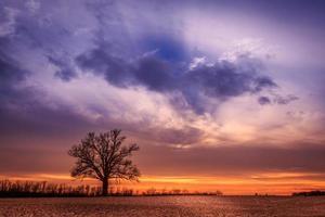 solnedgång träd