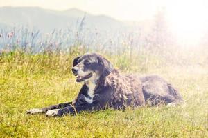 hund som ligger på gräset foto