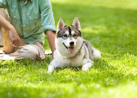 man och husky hund går i parken. foto