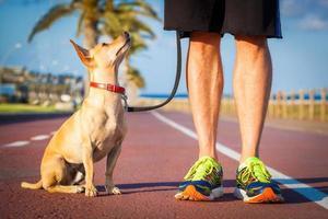 hund och ägare promenader foto