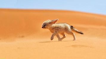 djur & natur foto