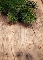 kvistar av ständigt gröna som används som dekoration foto