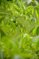 grönt träd foto