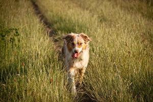 hundespaziergang foto