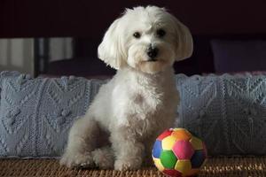 liten hund foto