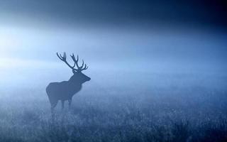 blå hjort