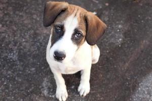thailand hund, närbild ögon hund foto
