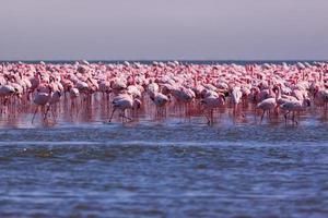 flamingoes foto