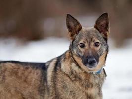 porträtt av en hund. foto