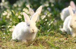 vita kaniner på grön äng