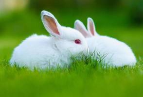 rolig vit vit kanin i gräs foto