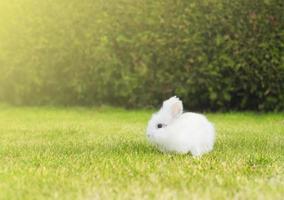 liten vit kanin på gräsmattan i trädgården