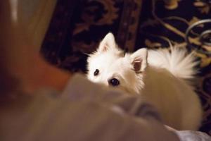 hund väntar ivrigt på behandling foto