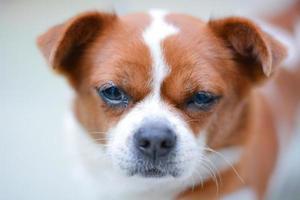 närbild av en härlig hund foto