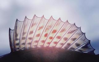 ryggfena av en walleye (gädda-abborre), tonad bild foto