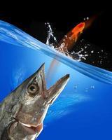 fånga fisk. foto