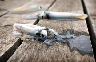 färsk bläckfisk foto