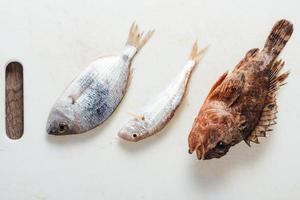 färsk hel fisk foto
