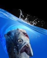 monster fisk. foto
