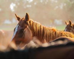 häst foto