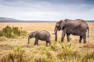 djur i kenya foto