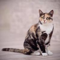 inhemsk flerfärgad katt foto