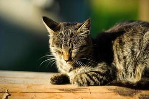 rolig katt och kattunge foto