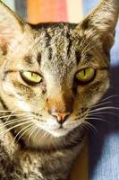 randig katt foto