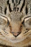närbild katt foto