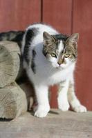 vacker katt framför brun bakgrund foto